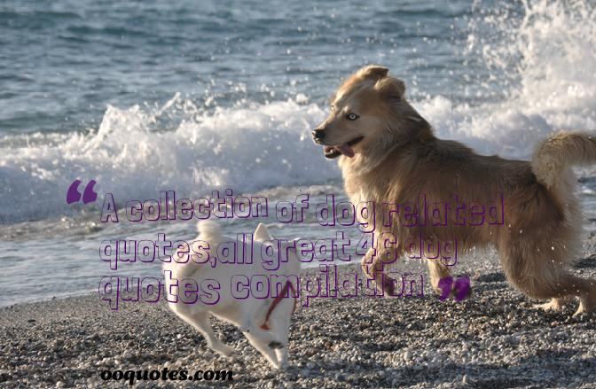 2 A collection of dog related quotes,all great 46 dog quotes compilation